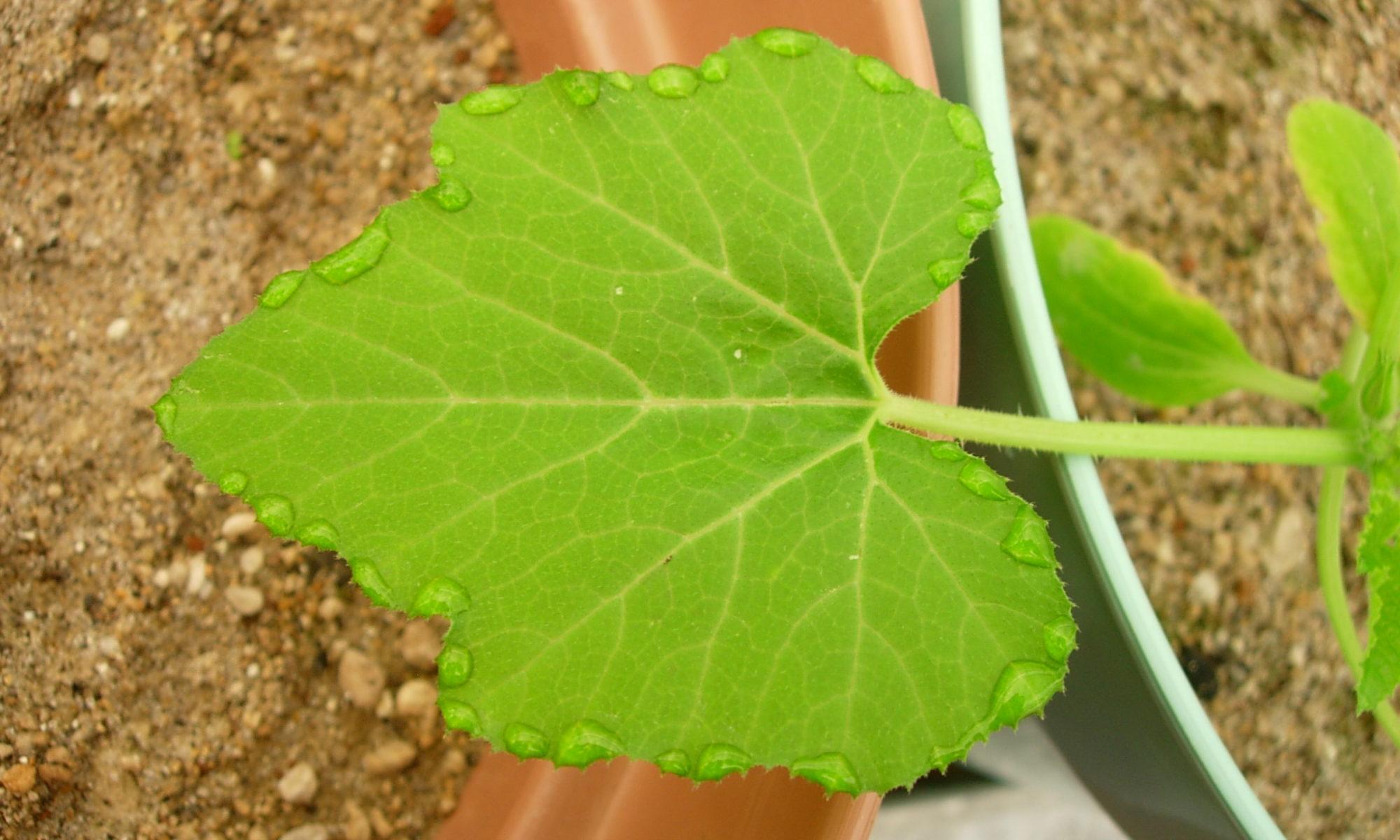Ecofisiología agraria
